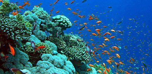 aree naturali marine
